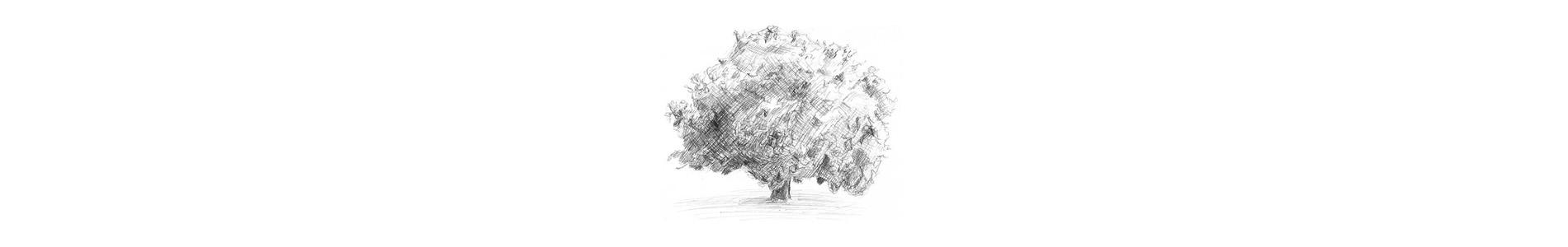 tree-slider